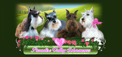 Miniature Toy Teacup Schnauzers for Sale | Toy Teacup
